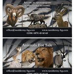 визитка - Animals for sale