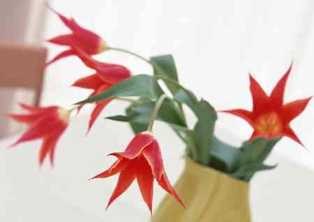 Снимки за календари www.tangrambg.com